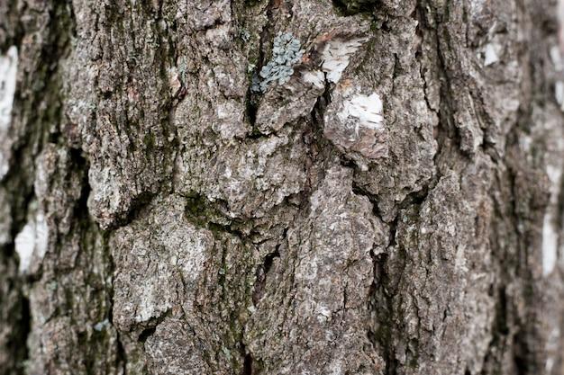 古い木の背景テクスチャ。自然な背景