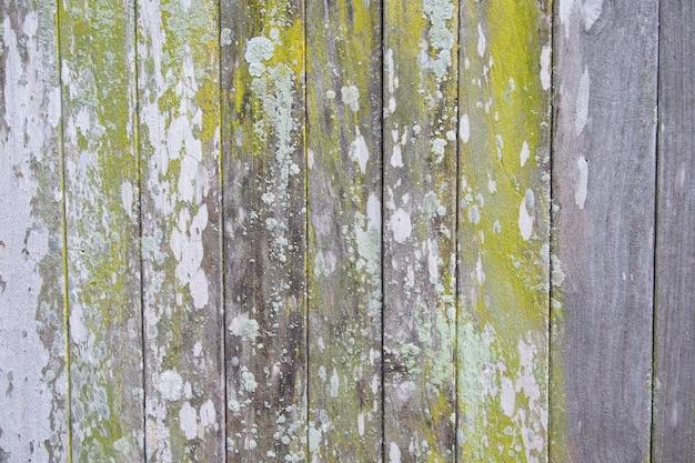 緑の苔と古い木の背景の質感