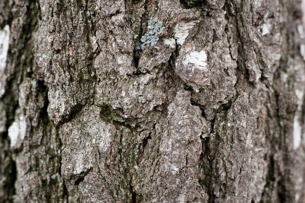 Background texture of old tree. natural background