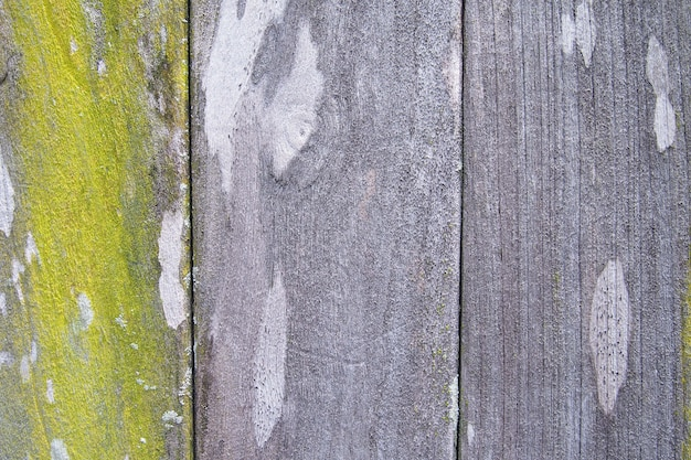 Background texture of old wood with green moss