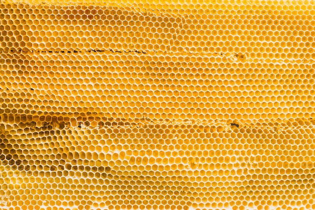 Background texture and pattern section of wax honeycomb from bee hive filled with golden honey in full frame view