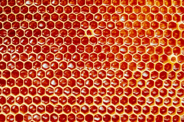 Background texture and pattern of a section of wax honeycomb from a bee hive filled with golden