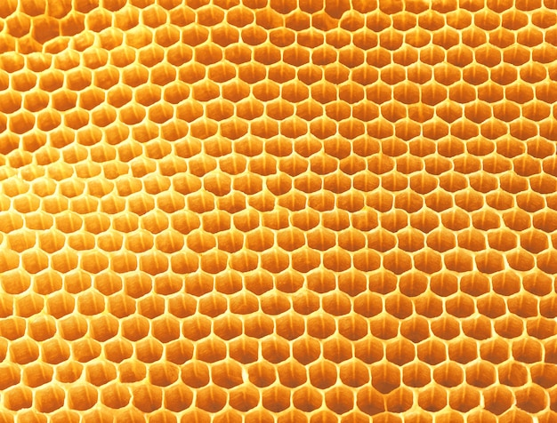 Background texture and pattern of wax honeycomb from a bee hive