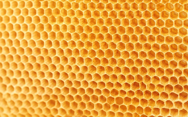 Background texture and pattern of wax honeycombs from a bee hive.