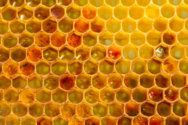 Background texture of a section of wax honeycomb from a bee hive filled with golden honey. beekeeping concept