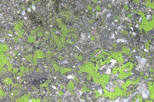 배경 질감: 이끼나 조류로 덮인 오래된 콘크리트 슬래브의 표면