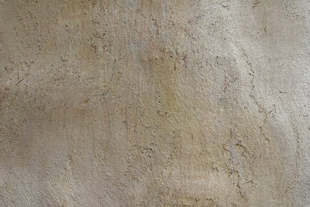 Background texture of the tree trunk without bark