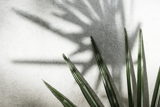 Background texture with shadows palm leaves on a concrete wall