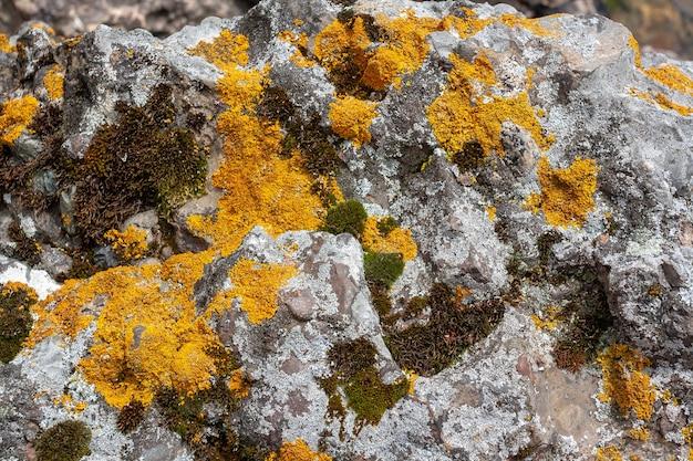 Фоновая текстура с желтым, зеленым и серым мхом с лишайником на камнях. горизонтальное изображение.