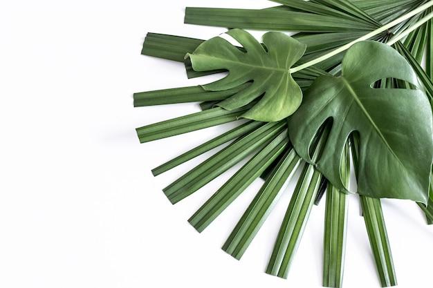 背景、白い背景の上の熱帯の別の葉
