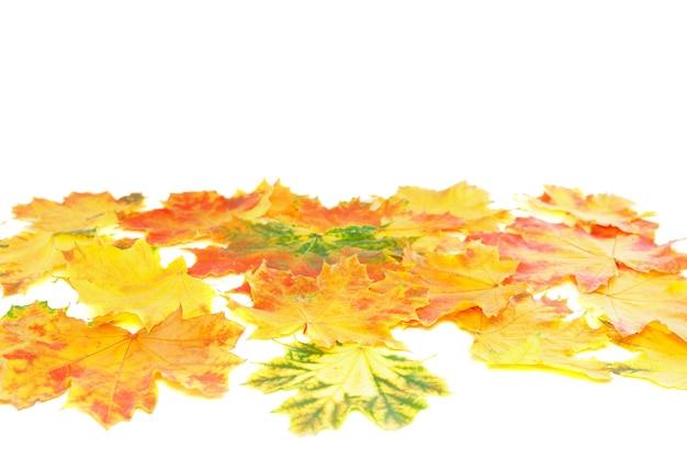 背景、壁紙-白の上の完璧な秋の葉。孤立