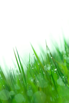 Background wet grass in the morning