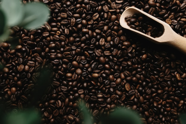 건조 커피 콩의 배열 배경