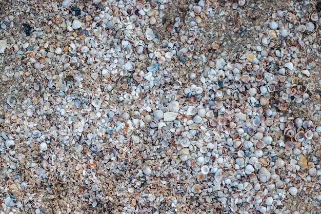 Фон с красивыми ракушками на пляже. вид сверху, плоская планировка.