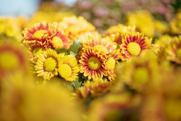 Background with beautiful yellow flowers