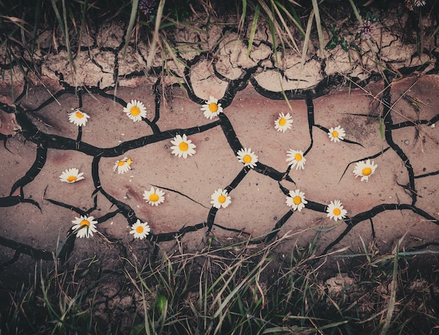 Background with brown dry crack ground, flowers and green grass