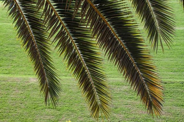 緑の草の上のヤシの木のテキストのコピースペースの背景