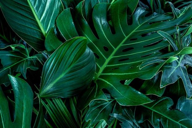 Фон с темно-зелеными тропическими листьями свежий плоский фон плоская планировка концепция природы