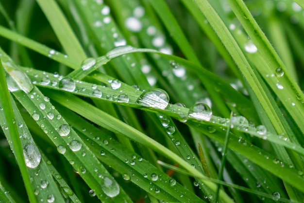Background with grass and dew drops.