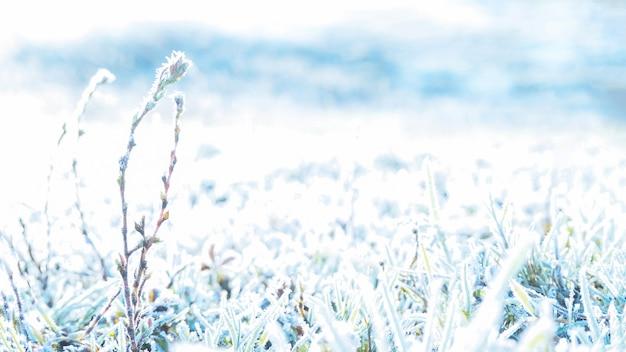 草、霜、太陽の背景。