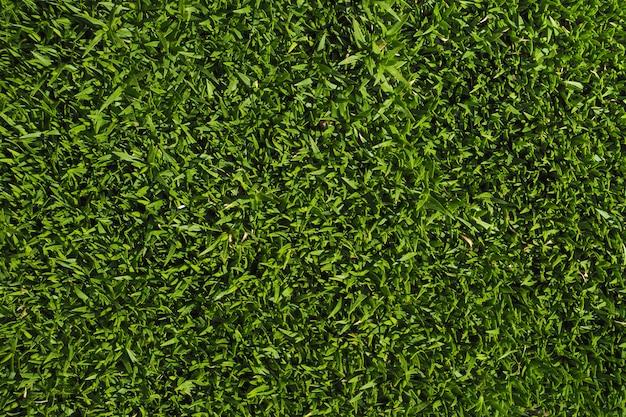 Фон с зеленой травой. закройте