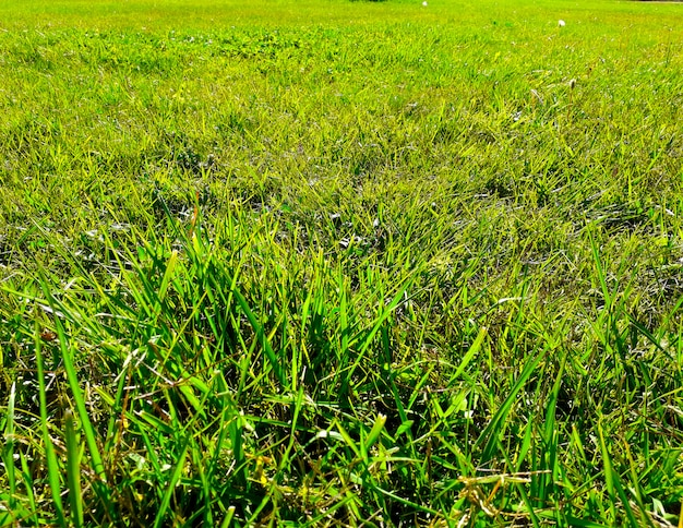 Background with green grass field and close up