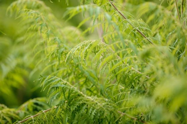 緑の小枝や葉、テクスチャの背景