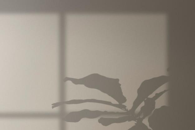 Monstera 나무와 창 그림자와 배경
