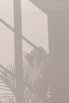 Sfondo con palma e ombra della finestra