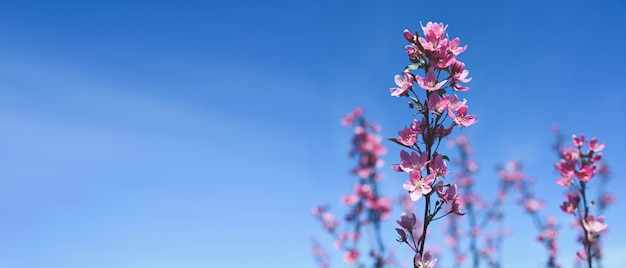 Background with pink blossom. beautiful nature scene with blooming tree branch and blue sky.