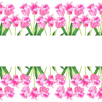 Background with pink tulips. hand drawn watercolor illustration. isolated.