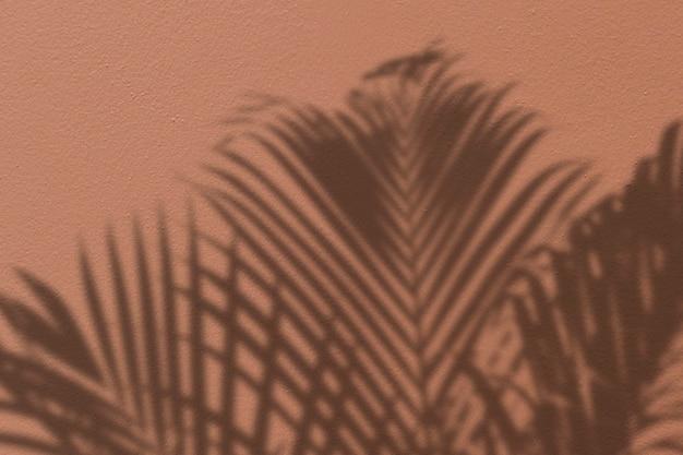Sfondo con l'ombra di una palma