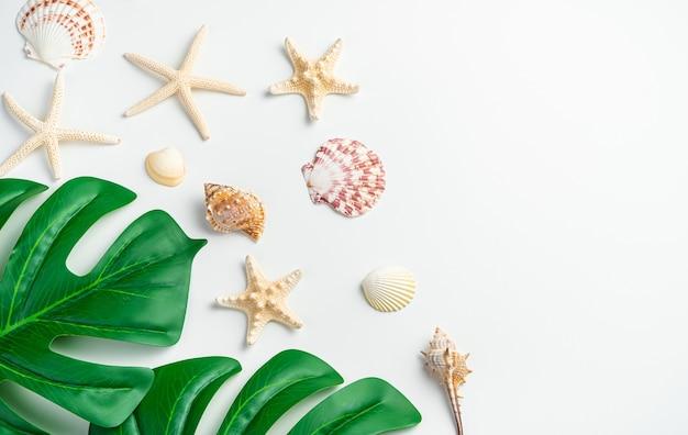 Фон с ракушками, морскими звездами и листьями тропического растения монстера на светлом фоне.
