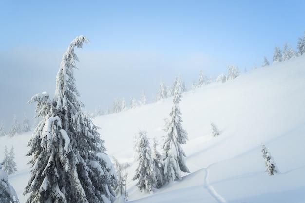 冬の自然と背景。丘の中腹に雪の中でトウヒの木。もやのある風景