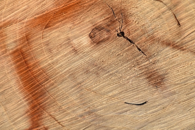 Background of wooden texture with rings