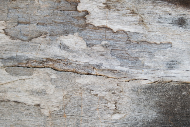 Background of wooden with termite damage