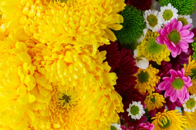 Background of yellow and pink  mum flowers close up