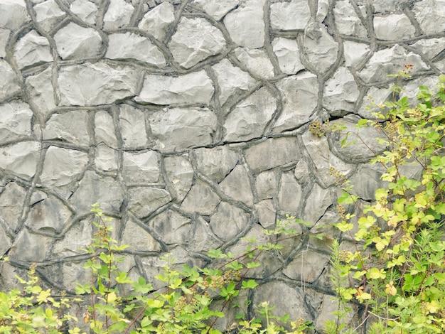 배경과 텍스처 개념. 돌 벽과 구불 구불 한 녹색 부시.
