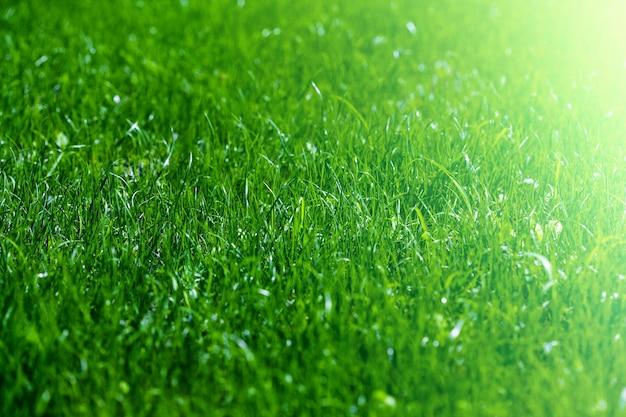 A backgrounds green grass