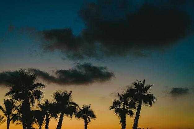 夏のビーチリゾートタウンで日の出のヤシの木をバックライト。