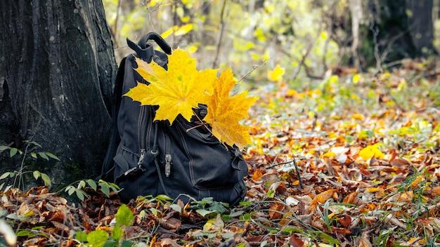 秋の木の下の森の中でバックパック。秋の森。森の中で休む。森の中のバックパックに黄色いカエデの葉