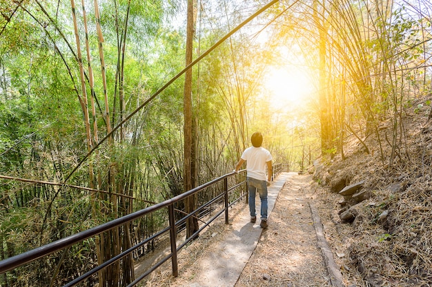Backpacker man look into the sky in bamboo forest
