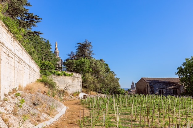 아비뇽 시내의 돔스 성모 성당 (교황의 궁전) 뒷마당