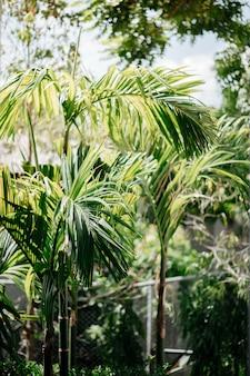 Backyard with many betel trees