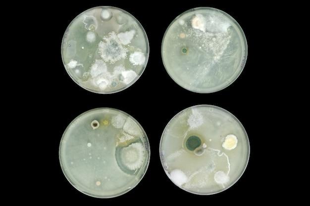 空気から分離された寒天プレート上の細菌