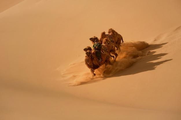 Двугорбый верблюд в пустыне гоби в монголии. верблюды в монгольской пустыне гоби, всадник на верблюдах в пустыне монголии с песчаными дюнами и сухими кустами