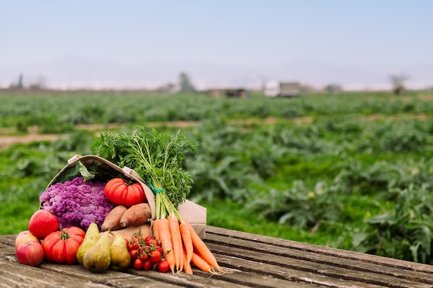 有機野菜や果物がいっぱい入ったバッグ