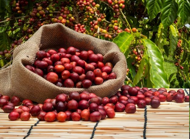 커피 농장에서 체리 커피 한 봉지