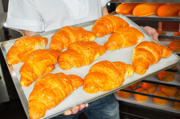 Baker holds fresh croissants in hands on sheet