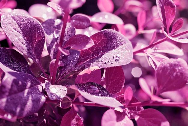 紫の花のbakground